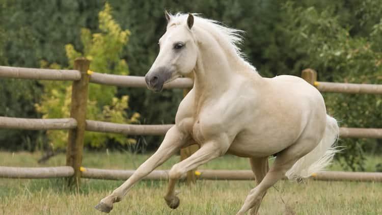 к чему снятся лошади женщине
