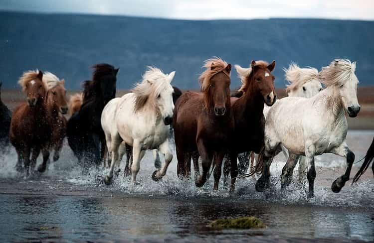 к чему снится белая лошадь женщине