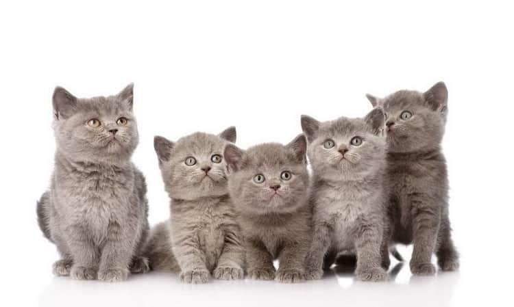 к чему снятся кошки во сне женщине
