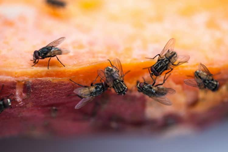 к чему снятся мухи много мух