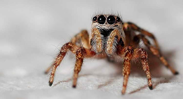 пауки сонник толкование