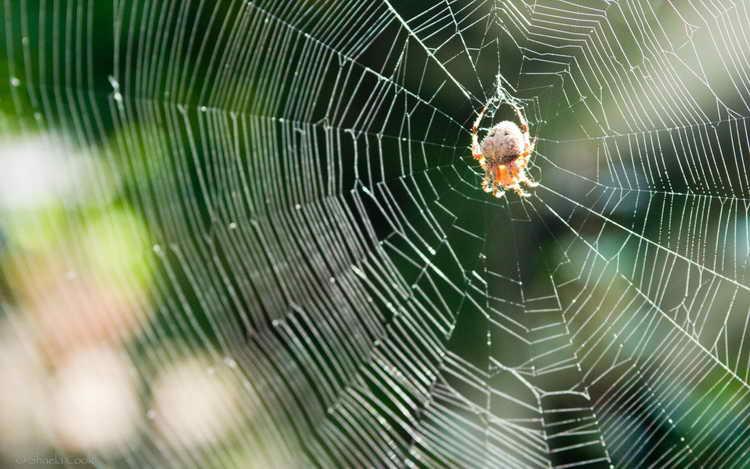 к чему снятся пауки во сне женщине