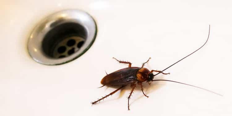 К чему снятся тараканы: трактуем значение сна