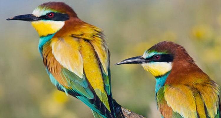 К чему снятся птицы во сне общая интерпретация