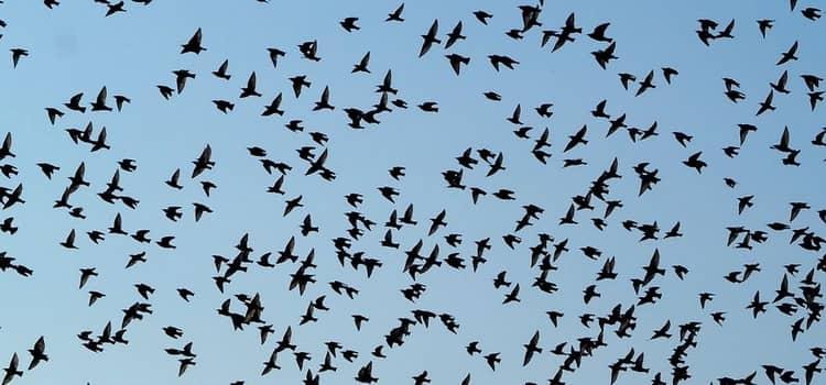 К чему снится много птиц