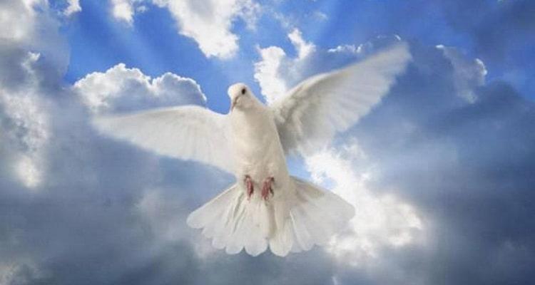 к чему снятся белые птицы во сне женщине