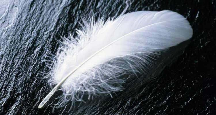 К чему снится перо птицы