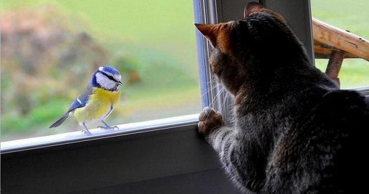 приснилась птица стучащая в окно