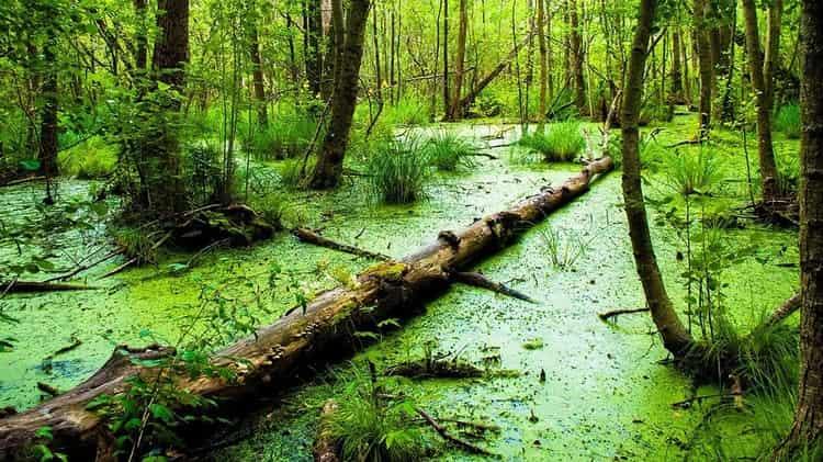 Если приснилось болото, знайте: это далеко не всегда плохо.