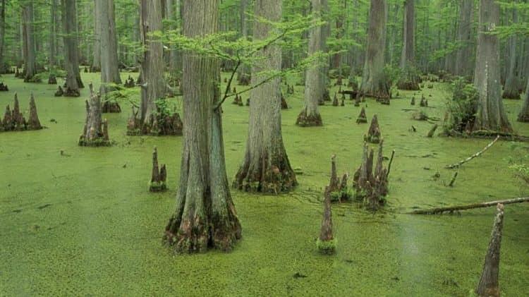 болото во сне может означать как негативные, так и положительные вещи.