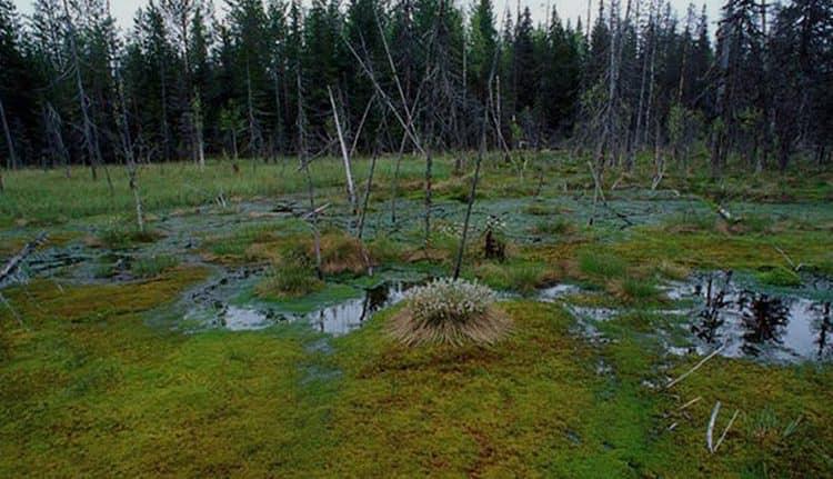 Узнайте, к чему снится зеленое болото.