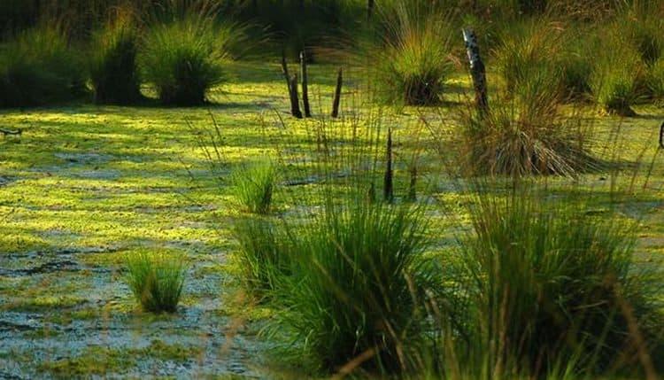 Видеть во сне болото в некоторых ситуациях к богатству.
