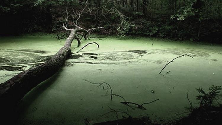 Соннику поможет понять, что означает тонуть в болоте во сне.