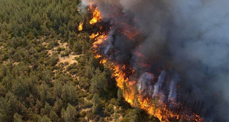 К чему снится что горит лес