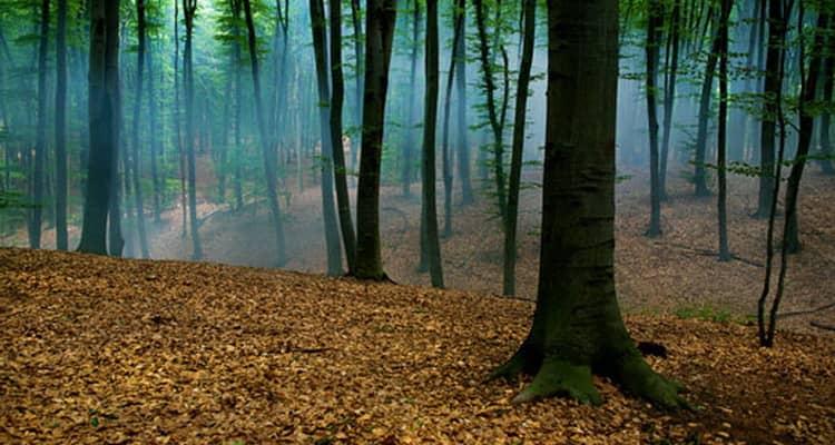 приснился лес