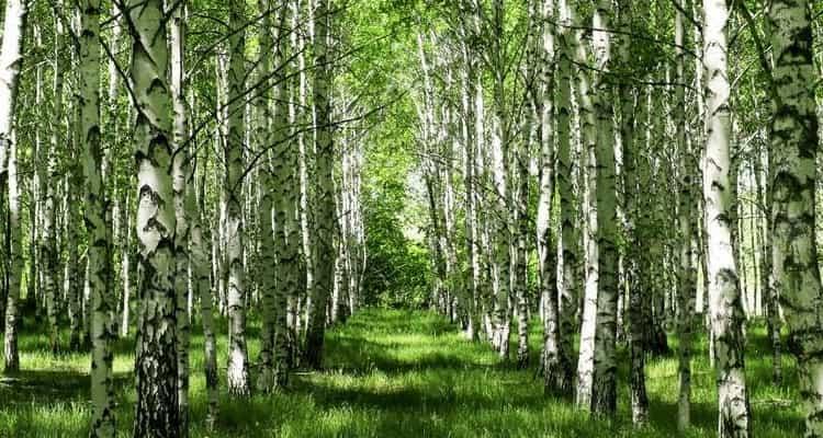 сонник к чему снится прятаться в лесу