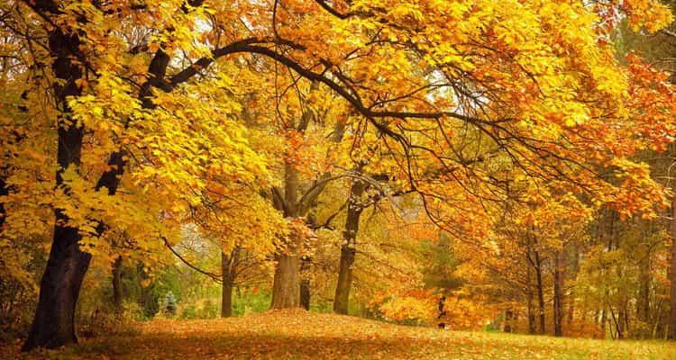 видеть во сне осенний лес