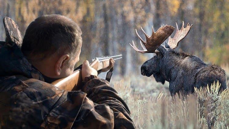 Сонник поможет понять, к чему снится охота на лося.