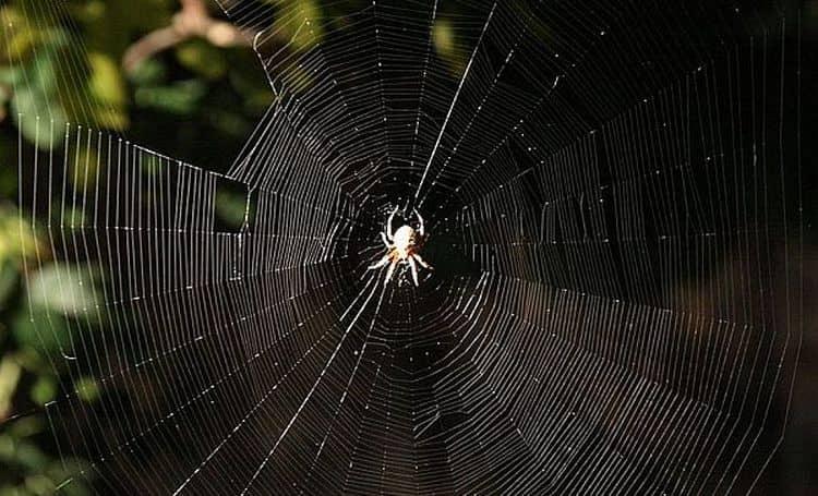 паук, сидящий во сне на большой паутине сулит осуществление ваших планов.
