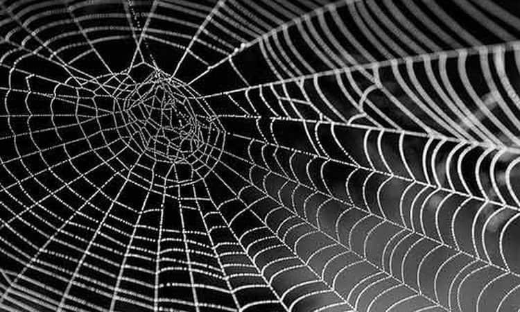 Поговорим о том, к чему снятся пауки и паутина.