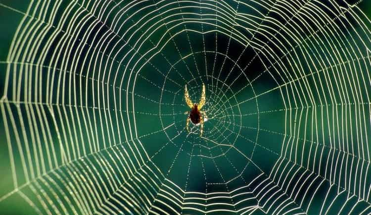 если приснились пауки и паутина, важно обратить внимание на ваши ощущения во время сновидения и его детали.