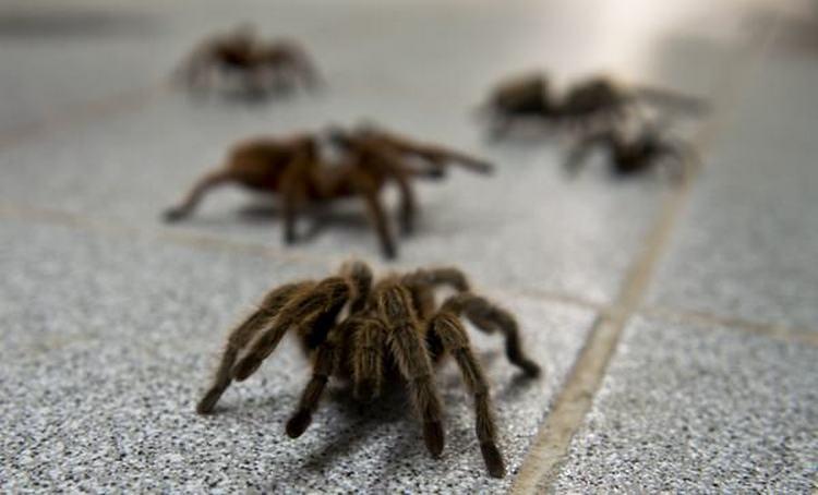 Узнайте, к чему снится много пауков и паутина.
