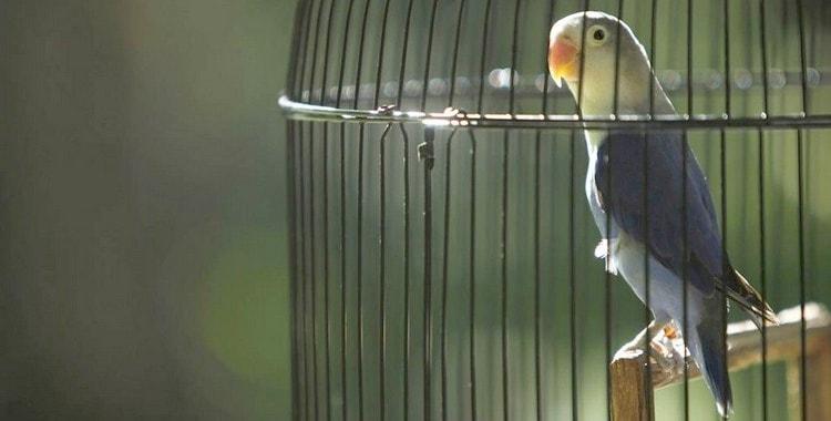 Попугаи сонник для женщины