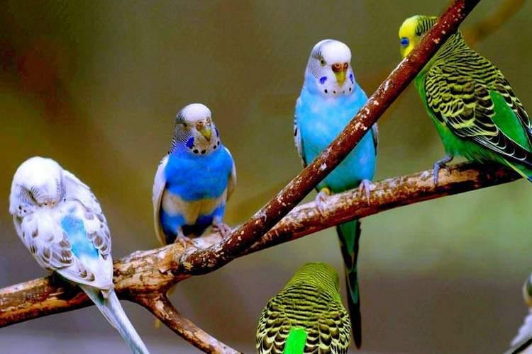 Посмотрите, к чему снится много попугаев.