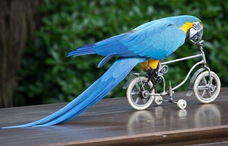 Судя по соннику, большой красивый синий попугай говорит о сильной усталости.