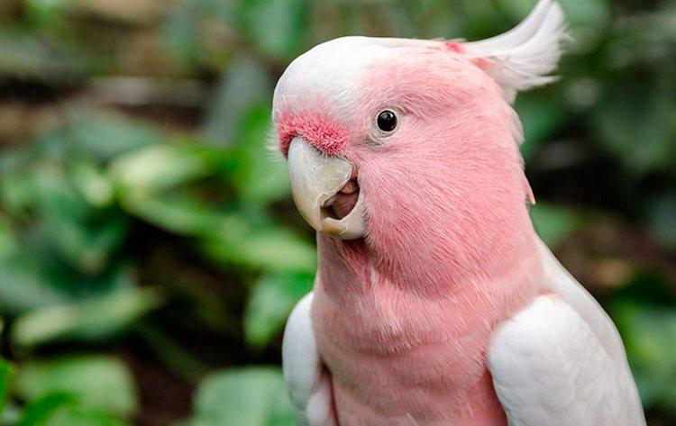 Узнайте, к чему снится попугай женщине.