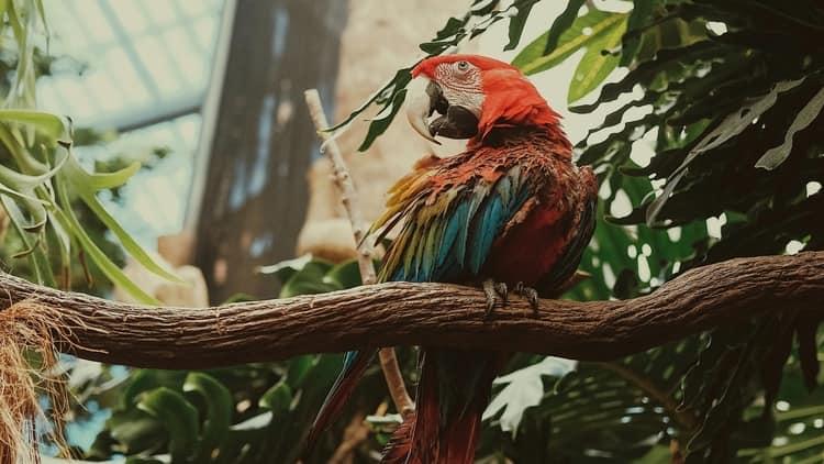Узнайте, к чему снится большой попугай.