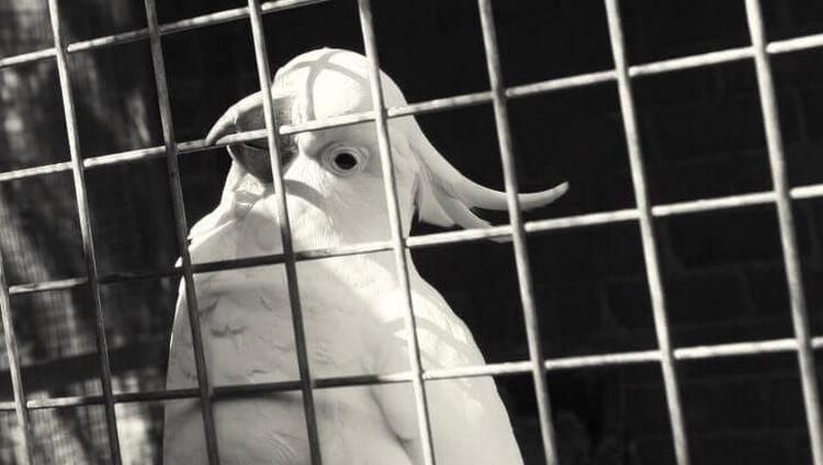 Посмотрите, к чему снится попугай в клетке.