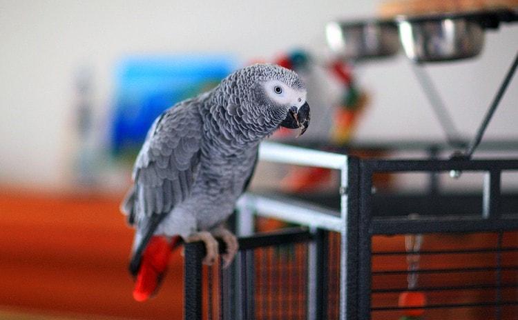 Узнайте, к чему снится говорящий попугай.