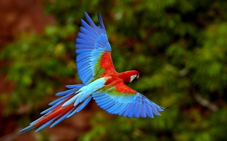 Узнайте, к чему снится большой цветной попугай.