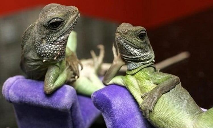 Узнайте, к чему снятся рептилии в постели.