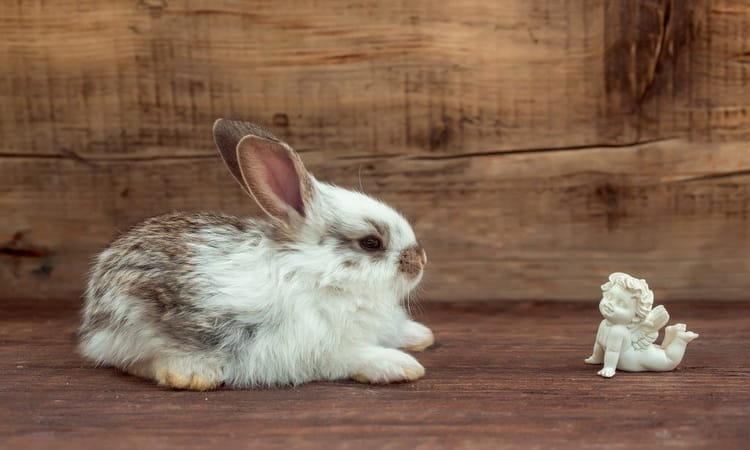 К чему снятся серые зайцы