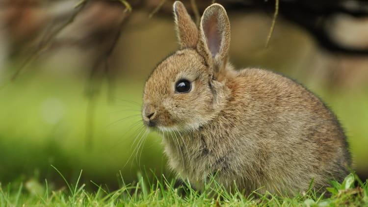 поймать во сне серого зайца