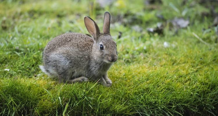 К чему снятся зайцы или кролики