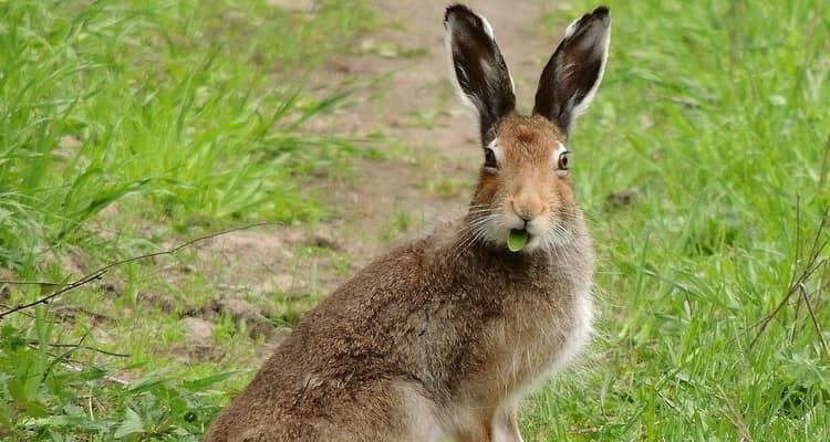 К чему видеть во сне зайца