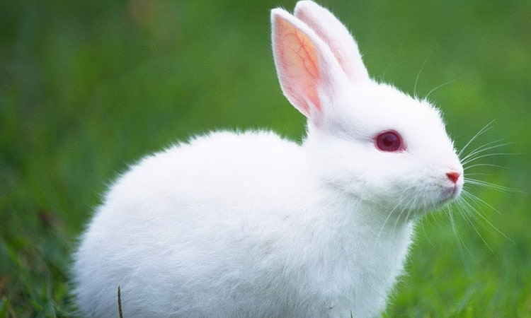 сонник приснился белый заяц