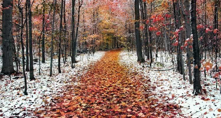 К чему снится зима осенью