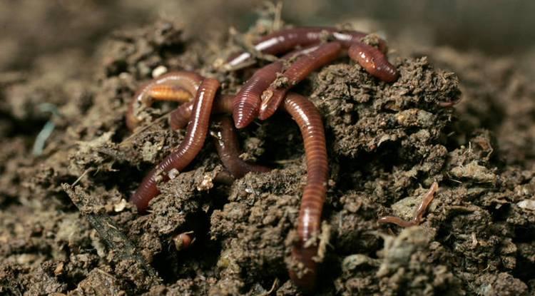 Если приснились червяки, это преимущественно недобрый знак.