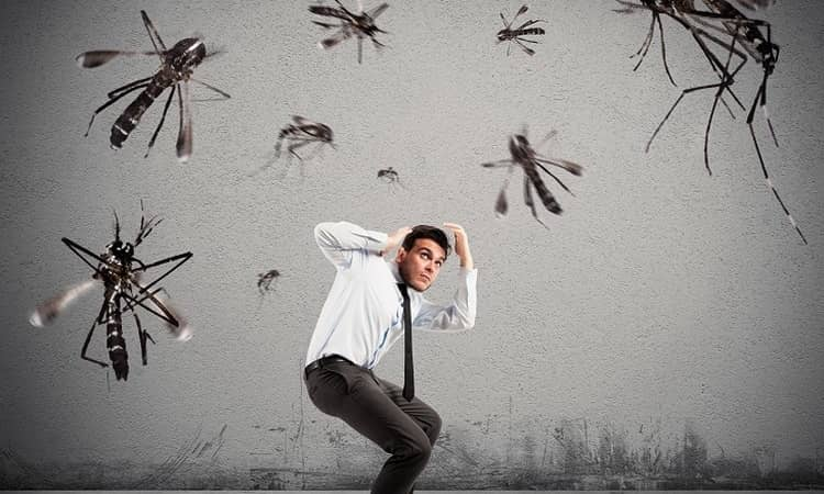 к чему снятся комары в большом количестве