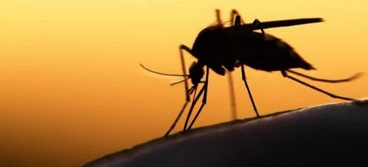 К чему снится что кусают комары