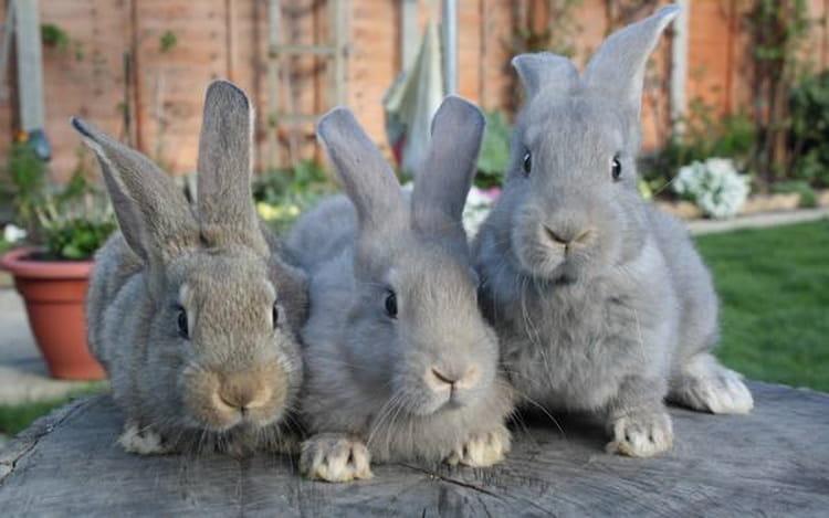 к чему снятся много кроликов женщине