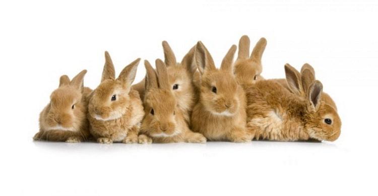 к чему снятся много маленьких кроликов
