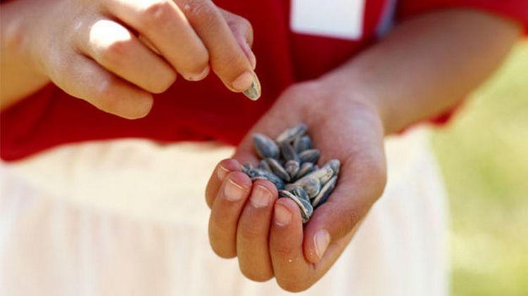 По соннику семечки подсолнуха могут иметь разное значение.