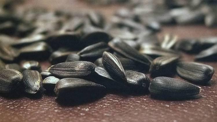 Узнайте, к чему снятся черные семечки подсолнуха.