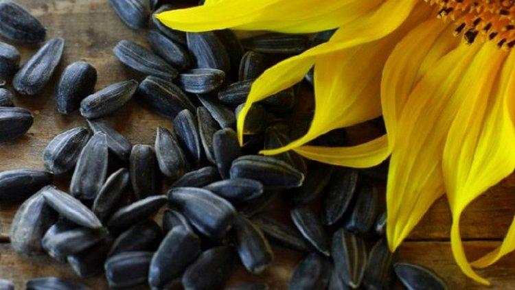 Узнайте, к чему снится много черных семечек подсолнуха.