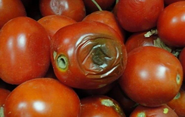 к чему снятся гнилые помидоры